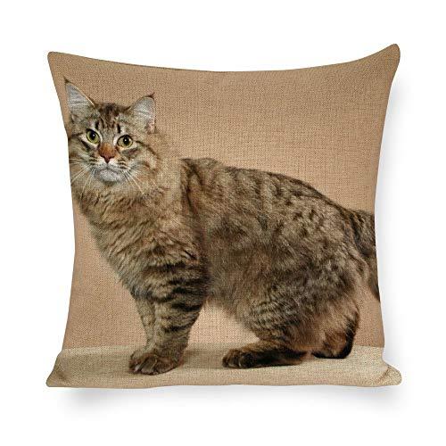 Dartys Pillow Cover American Bobtail cat Short Tail Striped Kurze Plüschkissenbezüge Fashion Classic Stripes Home Decor 45x45cm 18x18Zoll Schmusetuch Digitaldruck weiche Kissenbezüge Deko -