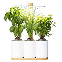 Prêt à Pousser Indoor Garden Lilo Grow your own fresh herbs at home, easy and all year round ❃ Including Basil, Mint and Chives