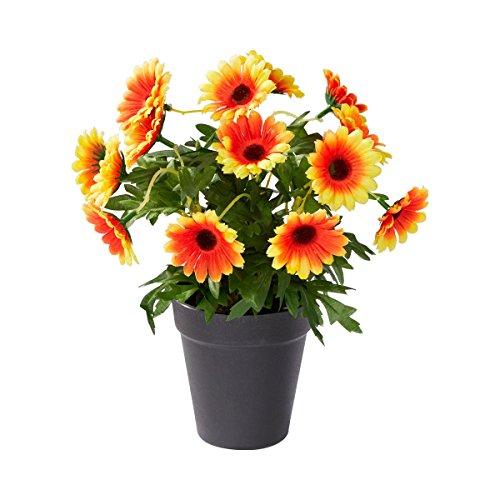 """Preisvergleich Produktbild Blumentopf """"Gerbera"""""""