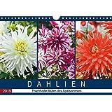 Dahlien - Prachtvolle Blüten des Spätsommers (Wandkalender 2019 DIN A4 quer): Porträts prachtvoller Dahlien im Spätsommer (Monatskalender, 14 Seiten ) (CALVENDO Natur)