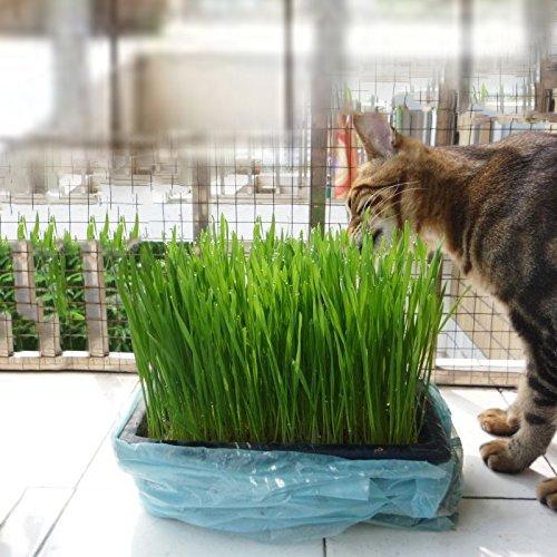 xbwwt Kristall Katze Grassamen Set zu helfen, verdauung haar ball cat gras samen 30g/Tasche