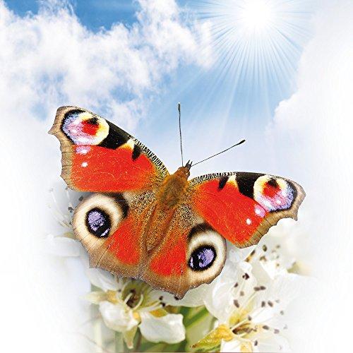 Apple iPhone 5 Housse étui coque protection Papillon Fleurs Fleurs Sac Downflip noir