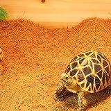 Greenhouse Terreau Litières Substrat Brique Fibre de Coco pour Reptiles Serpent Tortue - 40 x 40cm