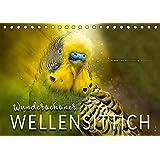 Wunderschöner Wellensittich (Tischkalender 2019 DIN A5 quer): Eindrucksvolle Bilder der beliebten Vögel. (Monatskalender, 14 Seiten ) (CALVENDO Tiere)