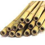 #0107 20 Stück Bambus Pflanzenstäbe 150cm Bambusstab Tonkin Stäbe Pflanzstütze Bambusrohr • Tonkin 12-14 mm Dick