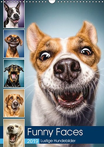 Funny Faces - Lustige Hundebilder (Wandkalender 2019 DIN A3 hoch)