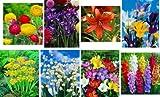 Dominik Blumen und Pflanzen, 256er Blzw-Sortiment, bestehend aus 786112-80Allium Moly,786151-10Convallaria,786153-30Freesien, 786155-30Gladiolen-Mix,786161-40Iris-blau, 786162-40 Iris-Mix,786165-6Lilien rot, 786167-20 Ranunkeln