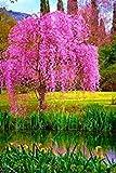 ASTONISH Sgomento SEMI: 10pcs / bag giapponese semi di albero bonsai sakura, piangente ciliegio, giardino domestico di DIY i semi di sakura belle semi di fiori 3