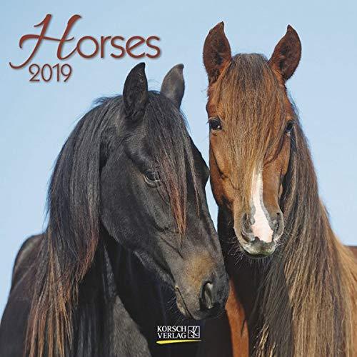 Horses (BK) 224919 2019: Broschürenkalender mit Ferienterminen. Pferde und Ponys. 30 x 30 cm
