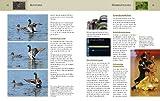 Nikon D5000 - eine Buchempfehlung von digitalkamera.de - mit digitalem Bildarchiv des Autors (Kamerahandbücher) Vergleich