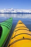 John Hyde / Design Pics – Kayakers enjoy a tranquil morning paddle in Lynn Canal Alaska near Juneau. Chilkat Mountains beyond. Kunstdruck (27,94 x 43,18 cm)