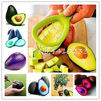 Zoom IMG-1 5 pz bonsai avocado delicious