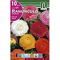 RANUNCULO FRANCESILLA MEZCLA DE COLORES - 10 BULBOS