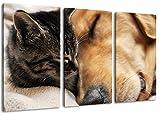 Katze und Hund Freundschaft 3-Teilig(120x80cm) auf Leinwand, XXL riesige Bilder fertig gerahmt mit Keilrahmen, Kunstdruck auf Wandbild mit Rahmen