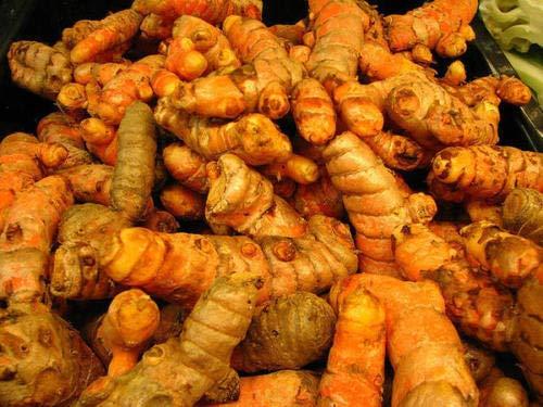 AGROBITS Quattro 4 radici fresche curcuma da mangiare o crescere Curcuma indiana zafferano Sp Rootm432