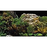 Hobby 31131 Fotorückwand-Zuschnitt Pflanzen 2 / 7, SB