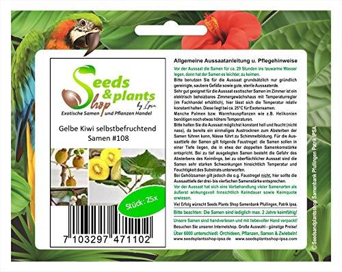 25 frutos semillas Kiwi Selbstbefruchtend amarillo
