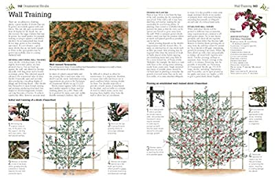 RHS Pruning & Training: Revised New Edition; Over 800 Plants; What, When, and How to Prune by DK