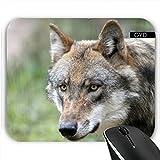 Mousepad - Wolf_2014_1227 by JAMFoto