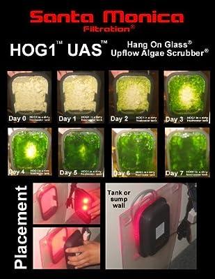 Santa Monica Filtration HOG1 Ascendant Flux Algues Frotter ATS Aquarium Filtre Turf Eau salée remplace chaeto réacteur protéine écumoire biopellet zeo Changement d'eau