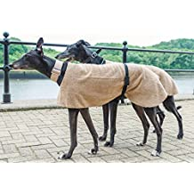 Beautiful, de Whippet Greyhound abrigo en único patrón de perro y casa
