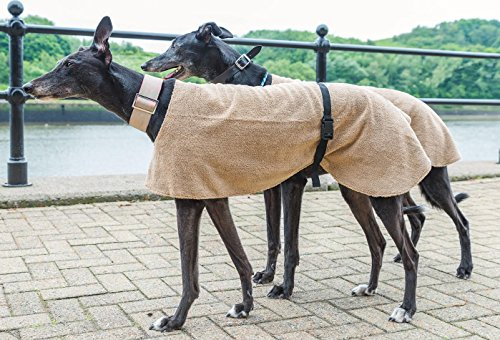beautiful-whippet-greyhound-coat-by-dog-and-home-xl