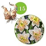 15x Narcisses 'Palmares' - Bulbe à fleursblanc-rose