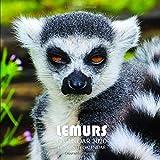 Lemurs Calendar 2020: 16 Month Calendar
