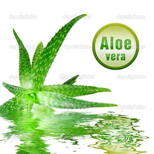 Aloe Vera Gel 1kg -