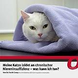 Meine Katze Leidet an Chronischer Niereninsuffizienz - Was Kann Ich Tun?