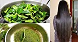 #1: Go Organic Curry Leaves Powder Curry Leaves To Grow Long, Strong And Shiny Hair ( 100 Grm )