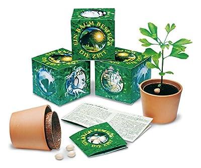 Ginkgobaum - Anzuchtset - Ein Baum besiegt die Zeit von FloraPresenta bei Du und dein Garten