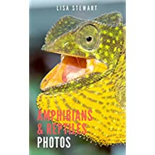 Amphibians and Reptiles Photos: Kids Books Series of World Exploration, Picture Book of Animals (English Edition)