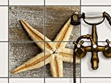 creatisto Dekorfolie Sticker-Fliesen | Selbstklebende Fliesenfolie Badezimmerfolie Badgestaltung | 20x20 cm Design Motiv Starfish - 4 Stück