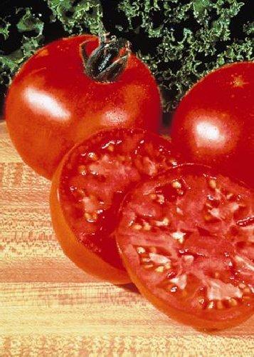 Tropica - Tomaten - Supersteak F1 (Lycopersicon esculentum) - 10 Samen - Gigantische - Krankheiten Resistent Gegen Tomaten-samen, Die