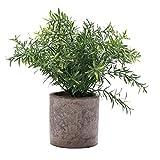 HC STAR Kunstpflanze Mini Fake Topfpflanzen Dekorative lebensecht Blumen Grün Pflanzen Round Pot Grün NEW01