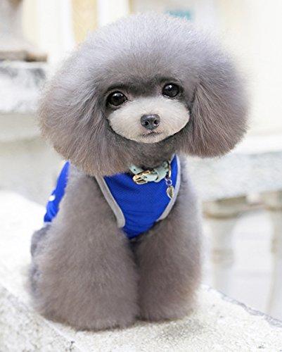 Weste Kleidung Für Kleine Hunde Frisch Und Atmungsaktiv Bequeme Passform Einfach Zu Tragen,Blue,XL (Mesh Samt Kostüme)