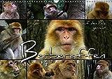 Berberaffen auf den Pelz gerückt (Wandkalender 2018 DIN A3 quer): Magots
