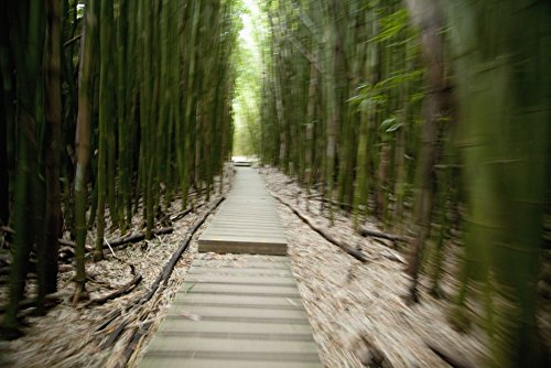 Jenna Szerlag/Design Pics - Hawaii Maui Kipahulu Haleakala National Park Trail Through Bamboo Forest on The Pipiwai Trail. Photo Print (48,26 x 30,48 cm)