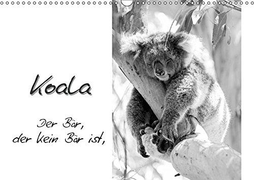Eukalyptus-bar (Koala Ein Bär, der kein Bär ist (Wandkalender 2019 DIN A3 quer): Fotos von und Informationen über Australiens einzigartigen Beutelbär (Monatskalender, 14 Seiten ) (CALVENDO Tiere))