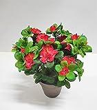 Ziegler Azalee Kunstpflanze Dekopflanze H 30 cm getopft 56655-33 Rot F85