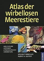 Atlas der Meerestiere - Wirbellose
