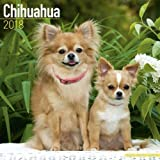 Chihuahua Calendar 2018 (Square)