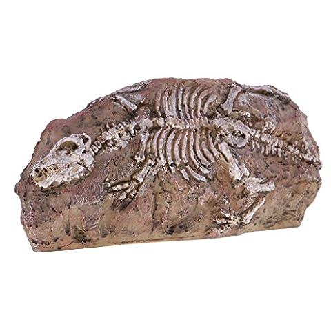 MagiDeal Dinosaurier Schädelprofil Skelett Modell, Sicherheit & Umweltschutz, Sammler Aquarium Haus Tisch Ornament Halloween Deko