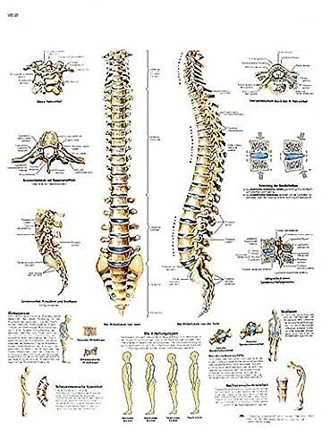 Planche Anatomique la Colonne