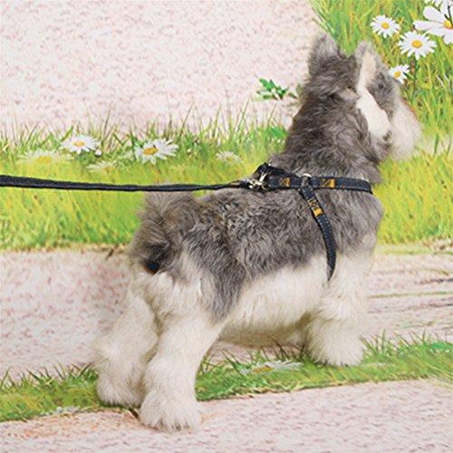 Hsooor Hundeleine Joggen mit verstellbarem Hüftgurt Leine Hund Joggingleine Schwarz 2.5cm