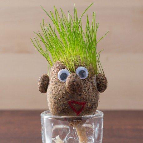 pequena-cabeza-de-hierba-grasshead