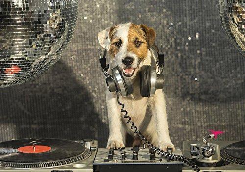 Welt-der-Träume Fototapete Tapete Wandbild DJ-Disco-Hund mit Kopfhörer | P8 (368cm. x 254cm.) | Photo Wallpaper Mural 10383P8-MS | Natur Kinder Tier Tiere Hund Hunde Disco Musik