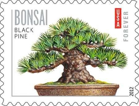 Bonsai schwarz Kiefer von uns Post–Fine Art Print erhältlich auf Leinwand und Papier, canvas, schwarz, SMALL (13 x 10 Inches ) (Pine Tree Bonsai Black Japanese)