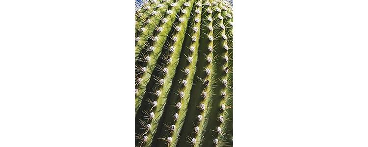 Piante da interno giardino e giardinaggio - Cactus da interno ...